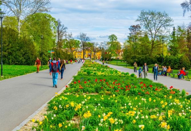 Uděláme z Olomouce znovu město květin